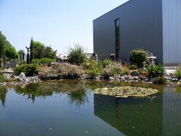Ausstellung Wassergarten